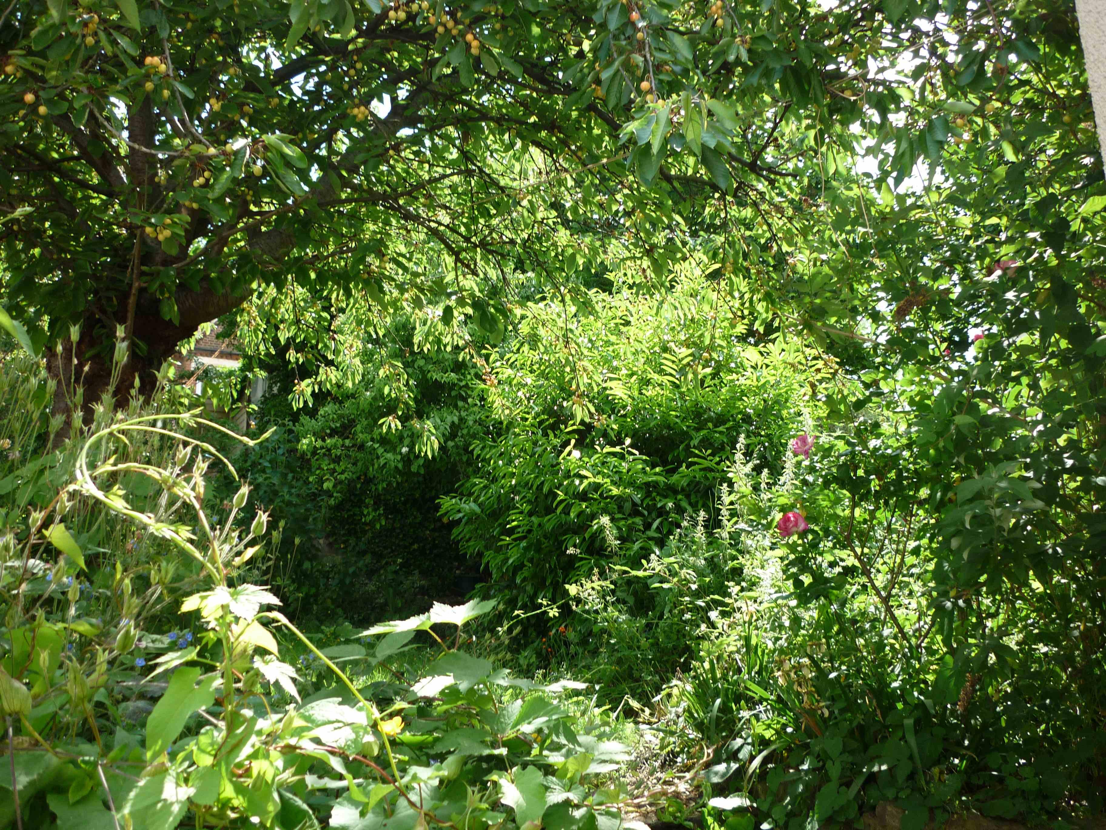 My Secret Garden: My Friend's House