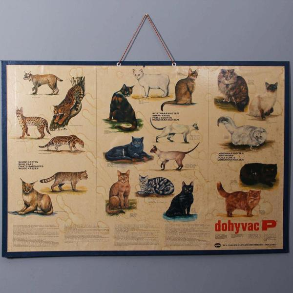 Cat lovers Species poster
